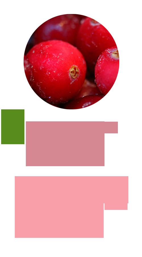 天然蔓越莓萃取