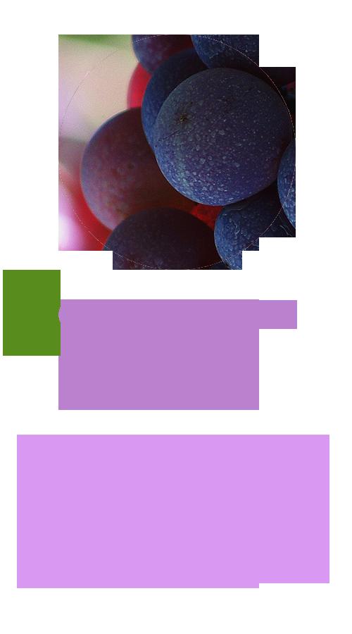 天然葡萄籽萃取